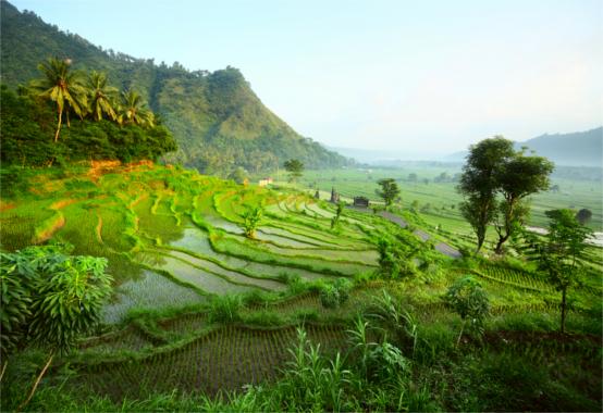 Indonesia Dudarev Mikhail / Shutterstock.com